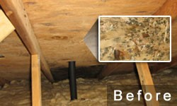 Nearly all types of mold can cause health problems so if there is mold in your attic you need to get rid of it. & Healthy Spaces | Attic Mold services